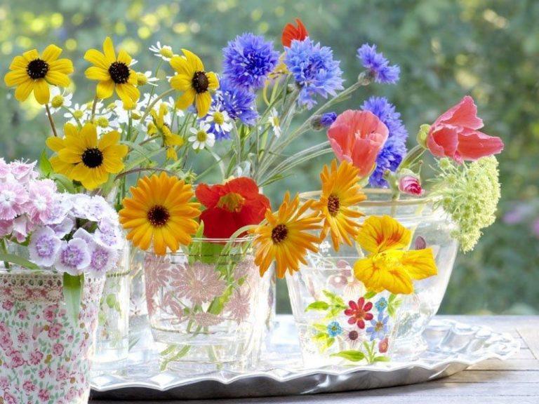 fiori-freschi (6)