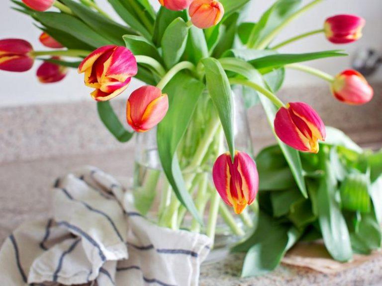 fiori-freschi (8)